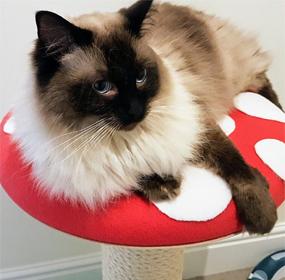 Customer Cat Gallery