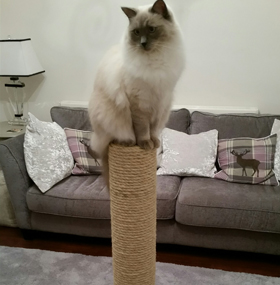 Buy a Quality Cat Scratching Post