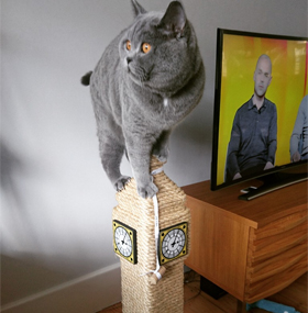 Big Ben Cat Scratching Post