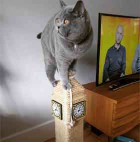 Big Ben Cat Scratching Post