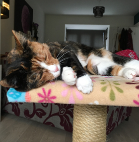 Value Cat Scratching Post with Platform