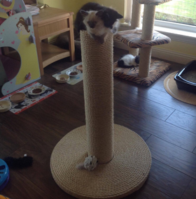 80cm Original Giant Cat Scratching Post