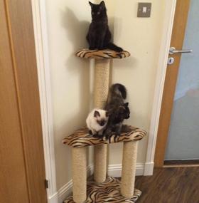 3 Tier Corner Cat Scratching Post