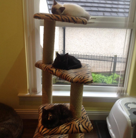 3 Tier Corner Cat Scratching Post