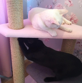 Pink and Grey Cat Tree