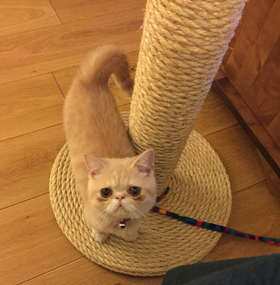 Original Cat Scratching Post