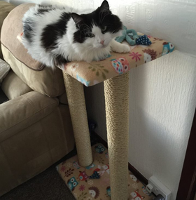 Large Twin Cat Scratching Post With Platform
