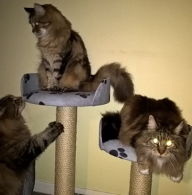 Large Twin Cat Scratching Post With 2 Tub Beds
