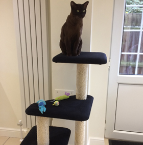 Black Cat Tree