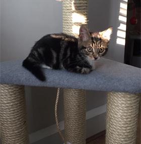 Corner Cat Scratching Post in grey