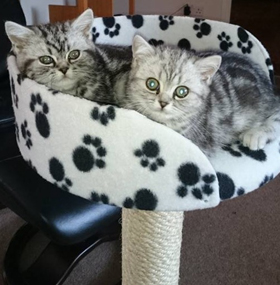 Sisal Cat Scratching Post with Tub Bed