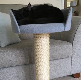 Cat Photos